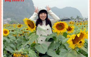 【上林图片】上林向日葵:抬头与低头的灿烂
