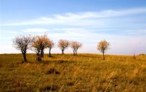【塞罕坝图片】2008年的记忆----坝上的秋天