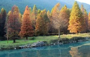 【临海图片】12.11——临海桐坑那片红杉林