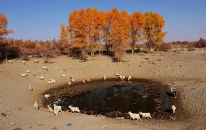 【塔克拉玛干沙漠图片】穿越塔克拉玛干胡杨之旅--行走在百里胡杨长堤