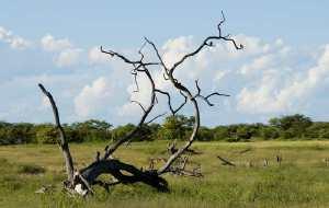 【纳米比亚图片】纳米比亚野生动物拍摄散记(四)