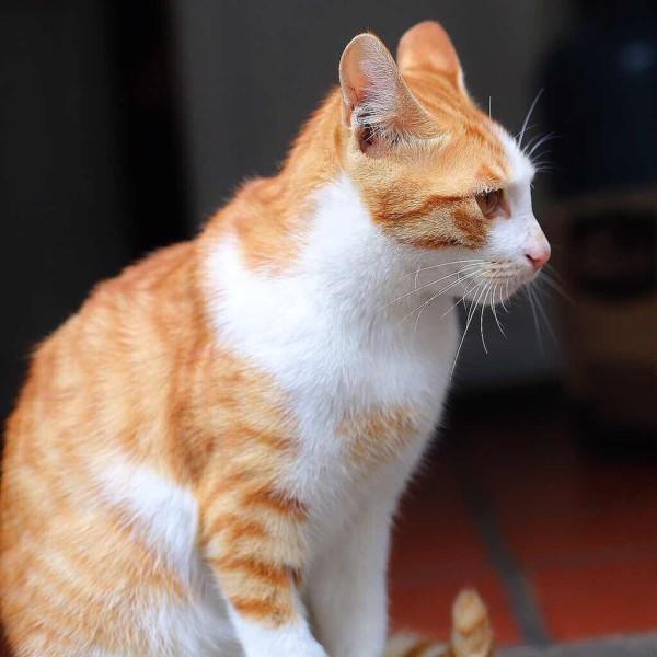 可爱猫咪比心图