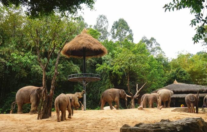 广州长隆野生动物园 一日游