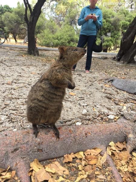 旦旅行记 初踏西澳袋鼠国的1500公里