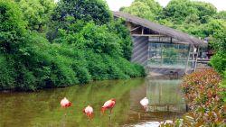 常州景点-淹城野生动物园