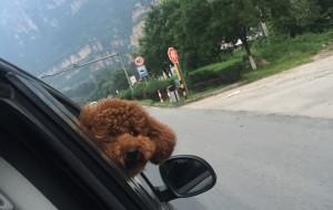 【房山图片】#一路看风景#狗狗看世界4:行走在山水之间