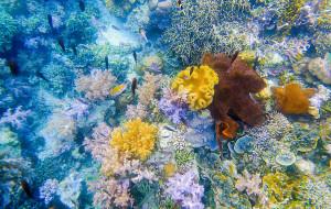 【美娜多图片】【带爱旅行】世界第一的潜水圣地