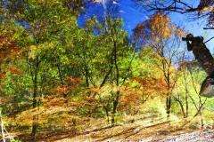 盘锦—本溪—坝上—草原天路的赏秋之旅