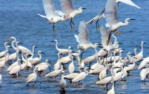【北戴河图片】北戴河湿地观鸟季(更新至2017年8月17日)