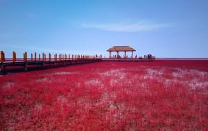 【葫芦岛图片】【辽宁印象】一路向北·遇见红与蓝的世界(兴城海滨浴场—笔架山—红海滩)
