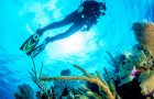 普吉岛皮皮岛深潜体验潜水(常驻皮皮15年资深老店+五星PADI认证+无证远海深潜+中文执教 )