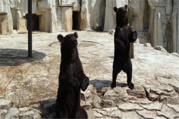 沈阳森林动物园是沈阳市唯一一家展出多种珍稀野生动物的综合性国有动物园,坐落于棋盘山风景区内,距市区17公里,是集动物保护、科普教育、科学研究、旅游休闲为一体的AAAA级景区;辽宁省暨沈阳市青少年科普教育基地;丹顶鹤人工繁育科研基地。有世界各地的代表性动物如黑猩猩、长颈鹿、金钱豹、袋鼠、海狮、海豹等。   密林幽谷、水禽湖、灵长馆、小动物村等主题展区是动物园人文与自然相结合的充分体现。其中小动物村特别适合小朋友,可以和小兔子、小松鼠、大耳羊、小棕熊、荷兰猪等动物亲密接触。在刚刚落成的两栖爬行馆内,可以看到黄