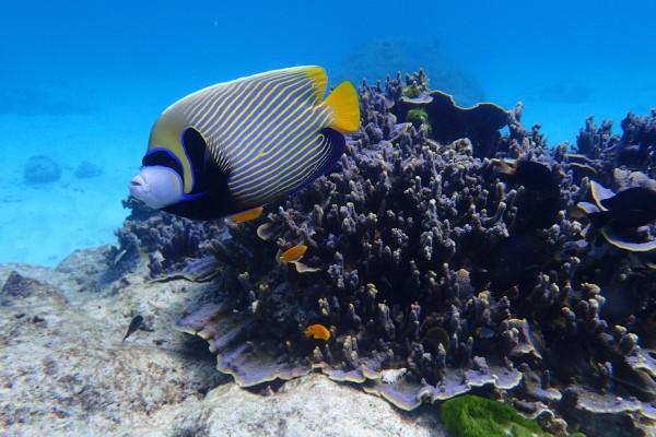 过把潜水的瘾-普吉岛(斯米兰群岛,大小皇帝