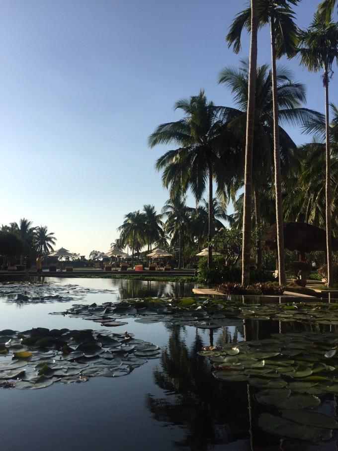 海滩椰树森林风景