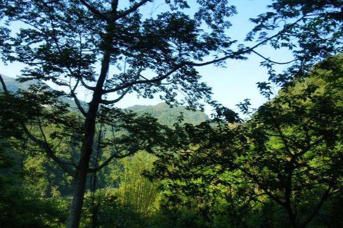 """大家顺着""""仔仔""""的手朝树上看去,看长在树上的天然灵芝是什么样子."""