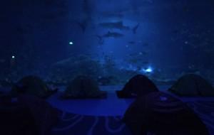 【珠海横琴长隆国际海洋度假区图片】。夜宿。珠海海洋王国鲸鲨馆