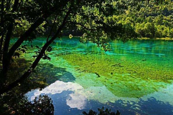 九寨沟 游记   水色清澈透明,幽静深邃,四岸千年古木,竹影婆娑,奇花异