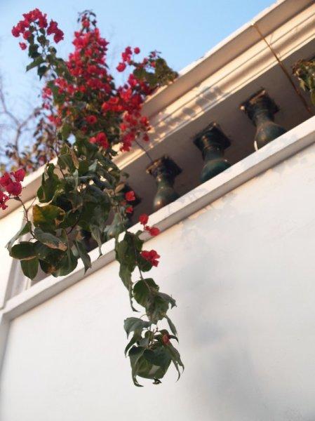 春花烂漫,百花齐放,一只红杏出墙来
