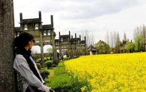 【兴化图片】赴一场遍地黄花 满目金黄的盛宴--春赏油菜花