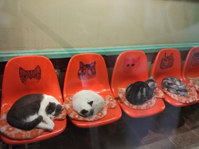 猫街~所有的喵都缩成球在凳子上呼呼大睡图片