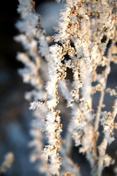在霧凇島結束對冬天的記憶