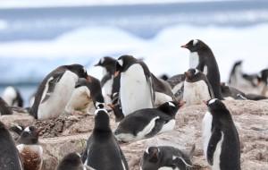 【南极洲图片】驶向世界上最后一块纯净的大陆 南极大陆