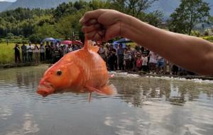 【方山图片】抓鱼大赛,刺激又好玩