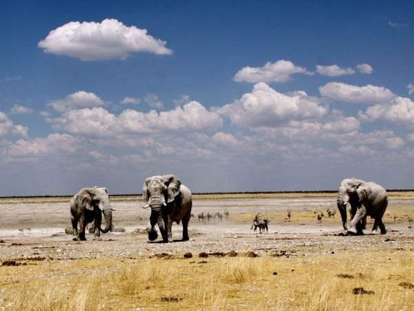 花样青春非洲篇-纳米比亚自由行招募啦