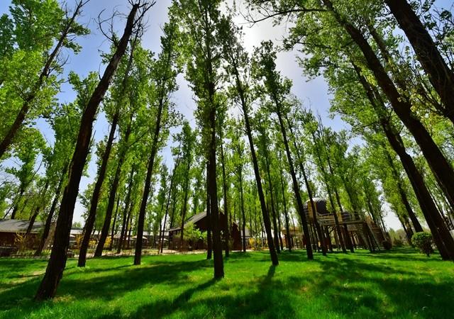 林栖谷森林温泉度假区(住宿 温泉 室外泳池 免费游度假区 儿童乐园)