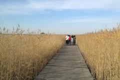鹤舞九天  物我同游——游扎龙湿地