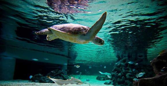 推荐亮点: • 位于阳光海岸的必游景点 • 昆士兰州最大并最具互动性的水母展示区 • 16个奇特主题区和80米长海底隧道  穆鲁拉巴海底世界坐落于美丽的阳光海岸,是昆士兰州最大的水族馆,景点已获得过多个奖项。 3层式设计以及16个奇妙主题区将带您亲眼目睹成千上万的海洋及淡水动物。 开启一次由海岸线通往海底深处的奇妙旅行。探索16个主题区,在长达80米的海底隧道中,让自己沉浸于大洋深处,欣赏叹为观止的海底美景。  与超过1万只的水生动物亲密接触。观赏全澳大利亚最大的水母展示,还