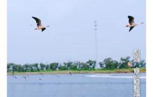 【黄骅图片】黄骅~南大港湿地公园~期待你更加美丽