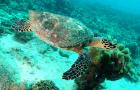 塞舌尔圣安妮海洋公园一日游+畅游海底世界+蜜月亲子(马埃岛出发)