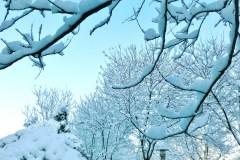 看看雪世界----晶莹、洁白、-----