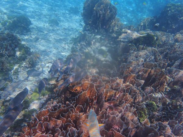 爱上那片深蓝——普吉岛&斯米兰群岛&达差岛游记