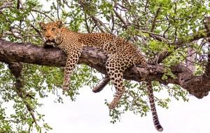 【开普敦图片】津巴布韦、南非|这辈子,一定要去趟非洲