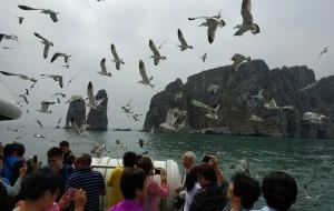 【长岛图片】万鸟岛(高山岛),庙岛