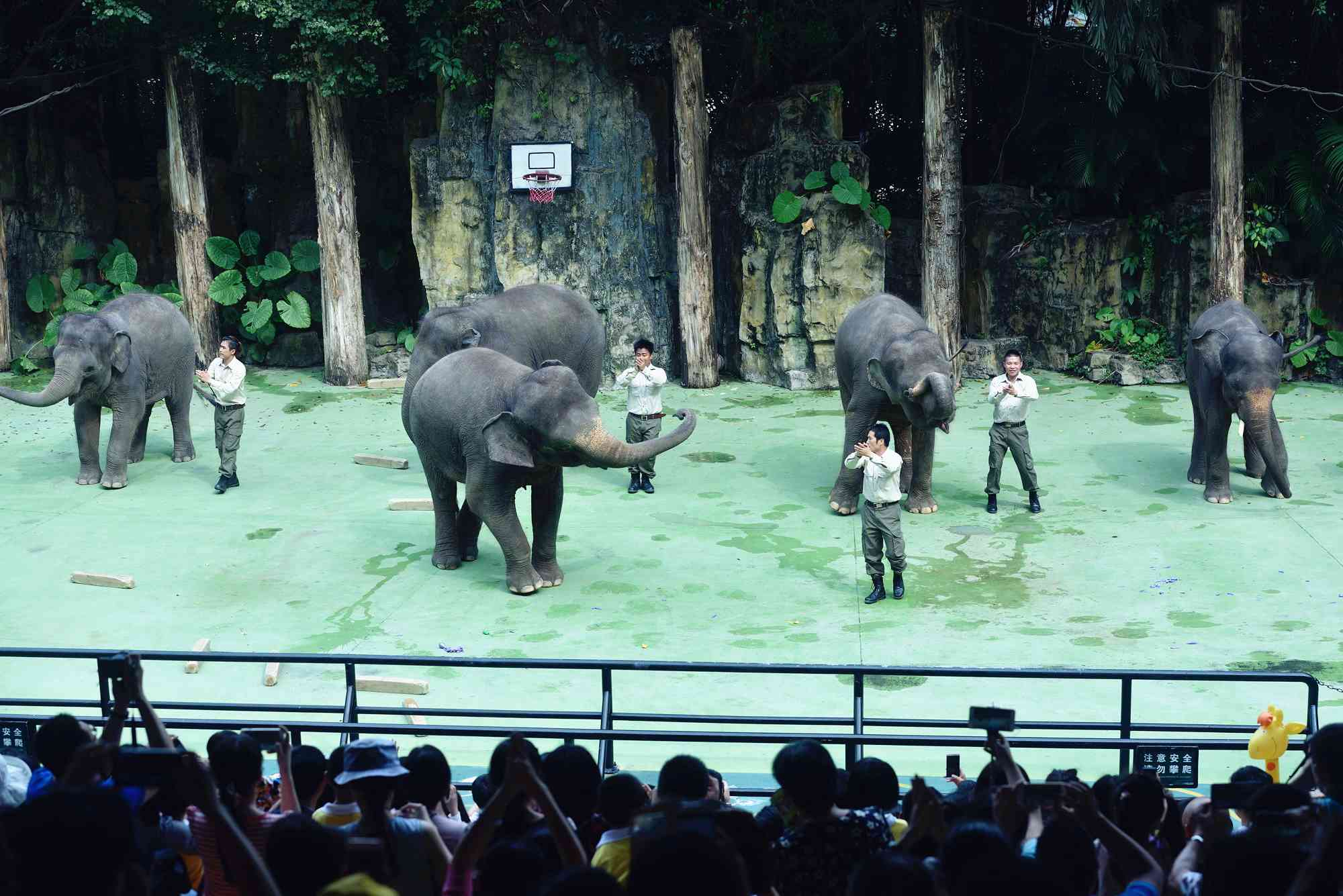 丰富多彩的动物科普课堂在长隆开展,在这里您可以了解动物的天性,倾听