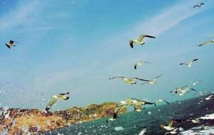 【长岛图片】长岛度假之旅!        守候海岛世外桃源!