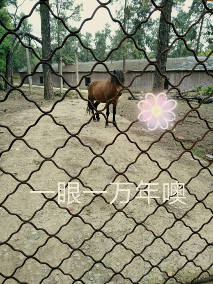 武汉九峰动物园两小时游