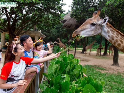 广州长隆野生动物园-珠海长隆海洋王国4日游 (2晚长隆