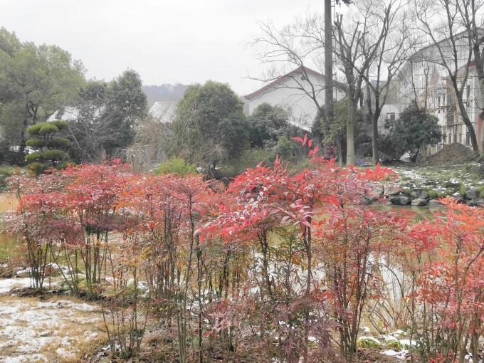 太湖鼋头渚风景区-樱花谷