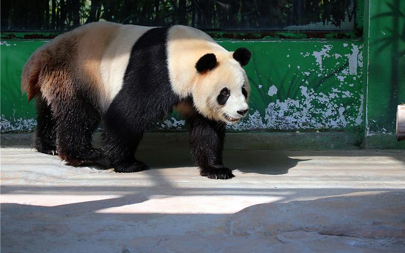 杭州野生动物园成人票