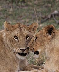 肯尼亚旅游注意事项