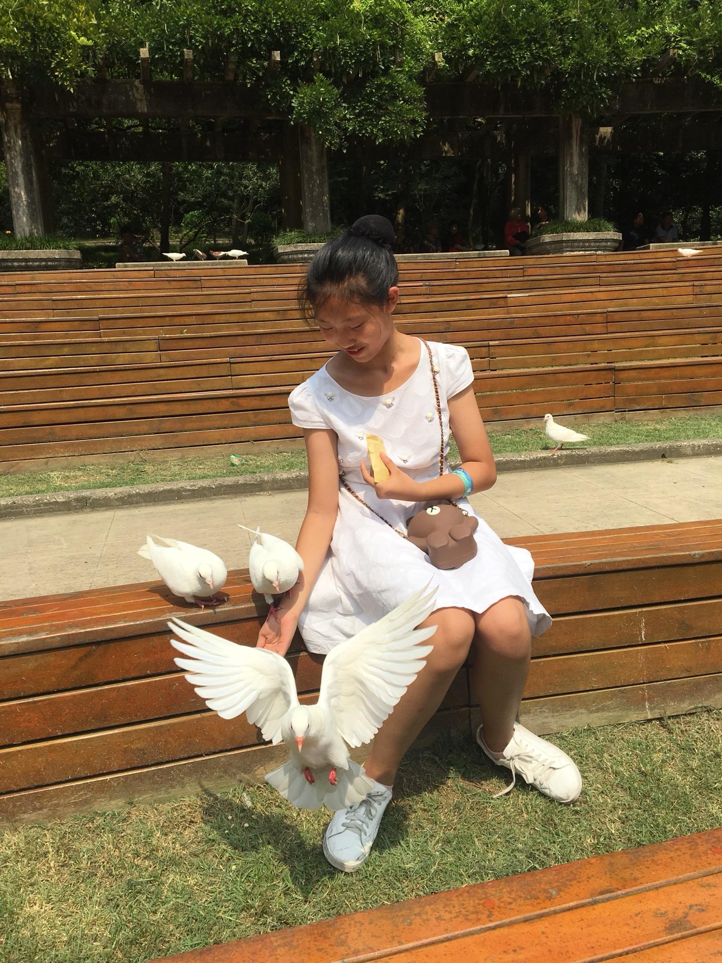 2019暑假游Day7-南京:钟山风景区(多景区最佳游玩顺序,实用滚球bet365yazhou_足球滚球365_365滚球手机客户)