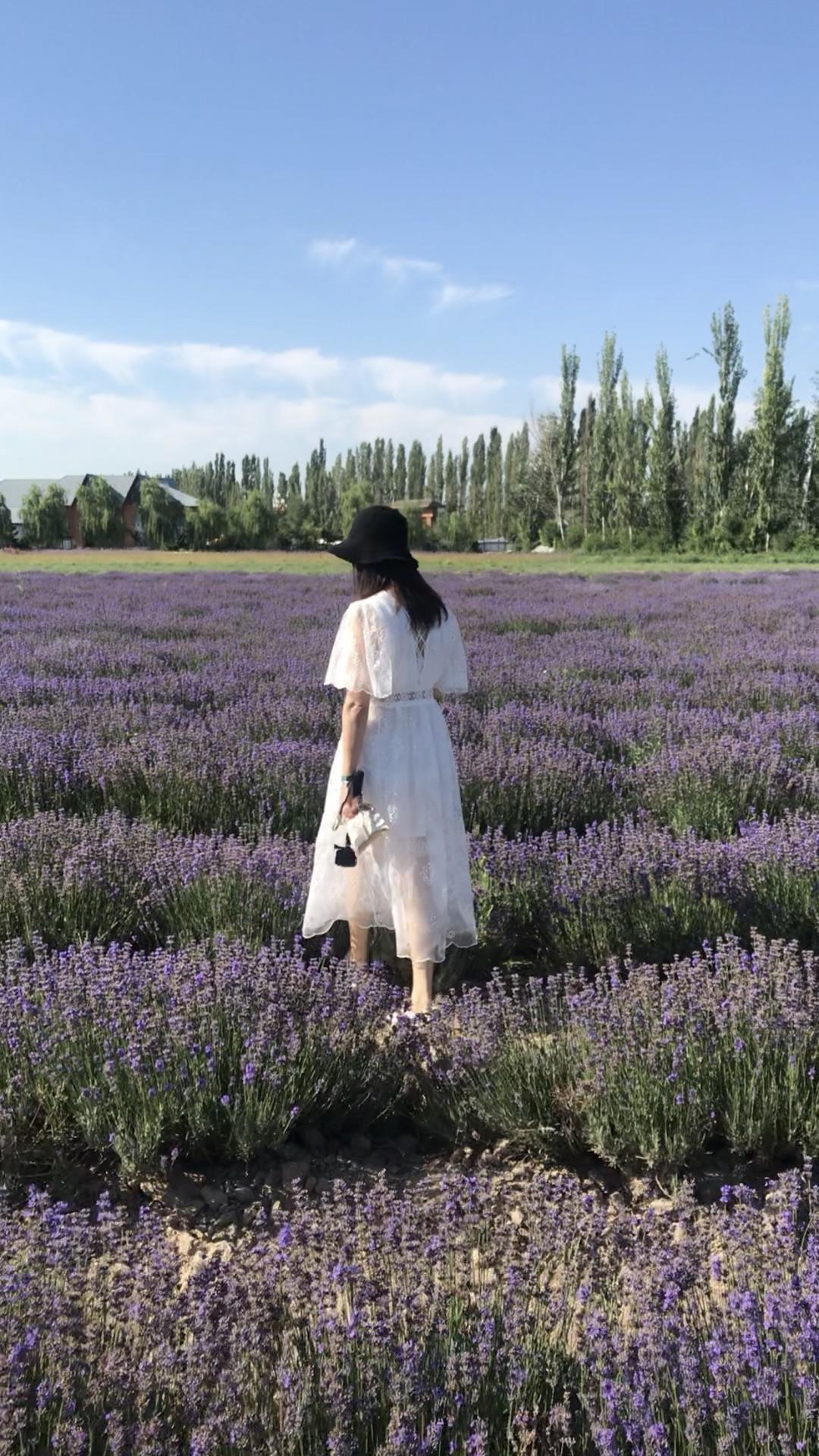 新疆的夏天在伊犁(二)