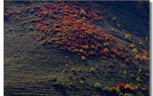 【乌兰布统图片】【金秋行摄之旅:内蒙古乌兰布统草原】