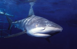 夏威夷娱乐-Hawaii Shark Encounters