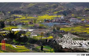 【安康图片】2012年陕西安康汉阴油菜花