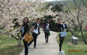 【旅顺图片】闺蜜畅游之【大连旅顺樱花节】